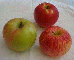 Clockwise from left: Gravenstein, Sansa, Duchess of Oldenburg apples (Bar Lois Weeks photo)