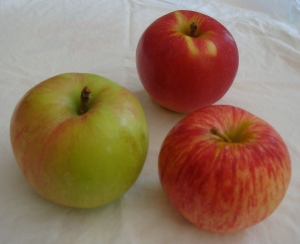 Clockwise, L to R: Gravenstein, Sansa, Duchess of Oldenburg apples (Bar Lois Weeks photo)