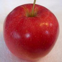 Gala apple (Bar Lois Weeks photo)