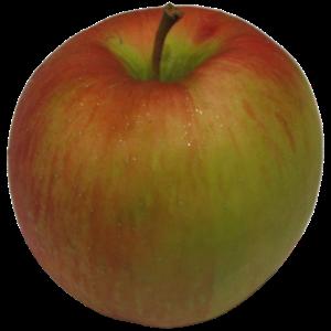 Honeycrisp Apple New England Apples Page 2