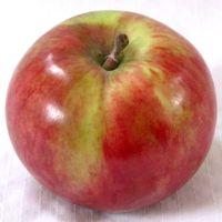 Snow apple (Bar Lois Weeks photo)