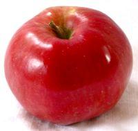 Northern Spy apple (Bar Lois Weeks photo)