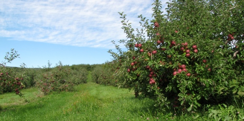 Green Mountain Orchards in Putney, Vermont, is just one of New England's many pick-your-own orchards. (Russell Steven Powell photo)