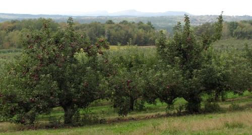 The view from Cold Spring Orchard, Belchertown, Massachusetts. (Russell Steven Powell photo)