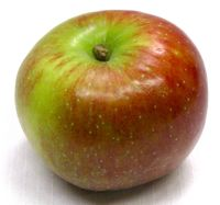 Baldwin apple (Bar Lois Weeks photo)