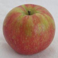 Honeycrisp apple (Bar Lois Weeks photo)
