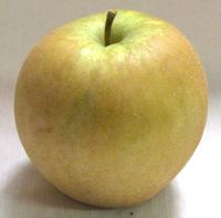 Hudson's Golden Gem apple (Bar Lois Weeks photo)