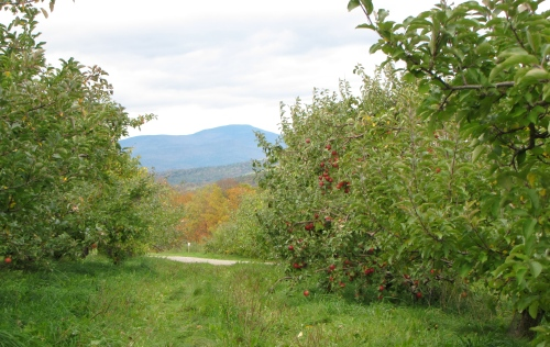 Mount Kearsarge looms in the distance at Gould Hill Farm in Contoocook, New Hampshire. (Russell Steven Powell photo)