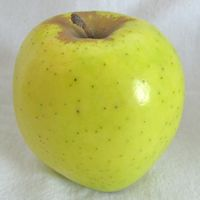 Mutsu, or Crispin, apple (Bar Lois Weeks photo)