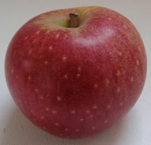 Westfield Seek-No-Further apple (Russell Steven Powell photo)