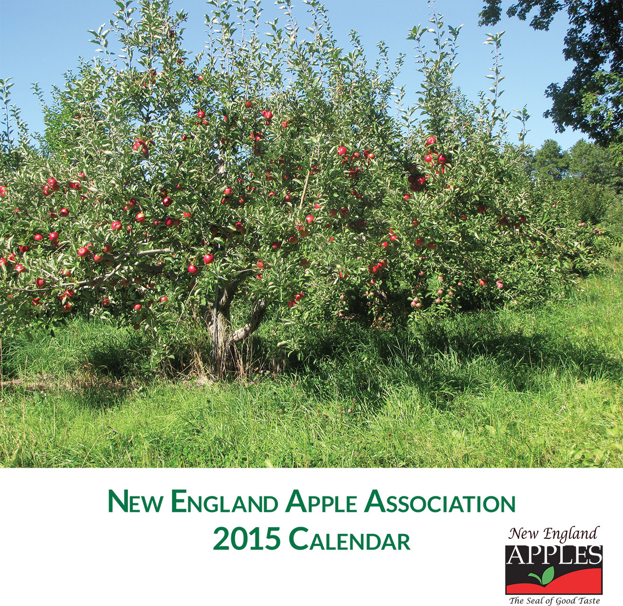 2015 New England Apples wall calendar