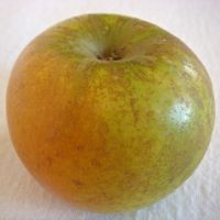 Golden Russet apple (Bar Lois Weeks photo)