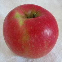 Pink Lady apple (Bar Lois Weeks photo)