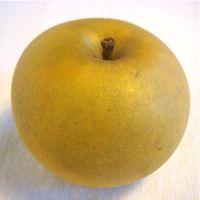 Pitmaston Pineapple apple (Bar Lois Weeks photo)
