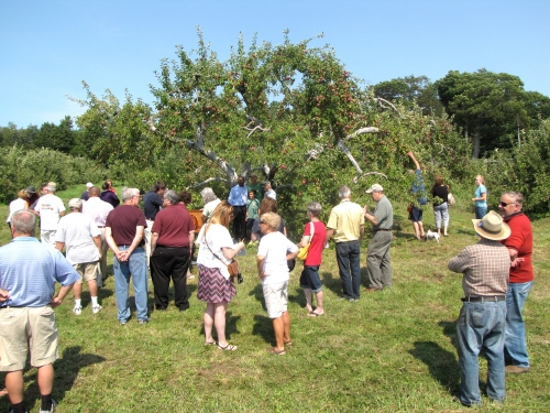 A crowd gathers before Red Apple Farm's century-old McIntosh tree. (Russell Steven Powell photo)