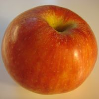 Red Gravenstein apple (Bar Lois Weeks photo)