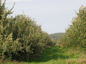 Bolton Orchards, Bolton, Massachusetts. (Russell Steven Powell photo)