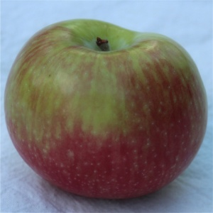 Melba apple