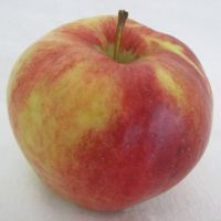 Mollie's Delicious apple (Bar Lois Weeks photo)
