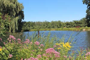Apple trees can be seen beyond a pond at Hickory Hill Orchards, Cheshire, Connecticut. (Bar Lois Weeks photo)