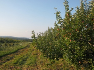 Quabbin Reservoir is visible in the distance from the Atkins Farms orchard in Belchertown, Massachusetts. (Russell Steven Powell photo)