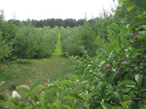 A beautiful hillside orchard at Sunnycrest Farm in Londonderry, New Hampshire. (Russell Steven Powell photo)