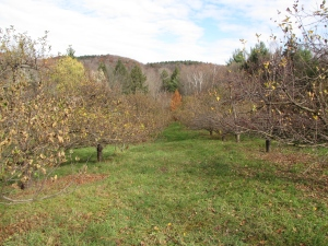 Brook Farm Orchard, Ashfield, Massachusetts. (Russell Steven Powell photo)