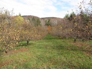 Brook Farm Orchard, Ashfield, Massachusetts. (Russell Steven Powell photo)