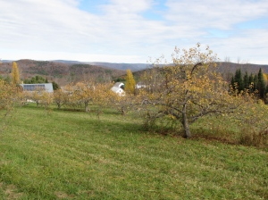 The cider mill at Bear Swamp Orchard in Ashfield, Massachusetts, is solar-powered.