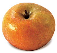 Ashmead's Kernel apple (Bar Lois Weeks photo)