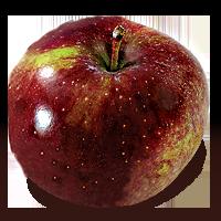 Black Oxford apple (Bar Lois Weeks photo)
