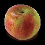 Cox's Orange Pippin apple (Bar Lois Weeks photo)
