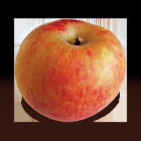 D'Arcy Spice apple (Bar Lois Weeks photo)