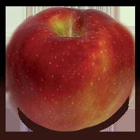 Hampshire apple (Bar Lois Weeks photo)