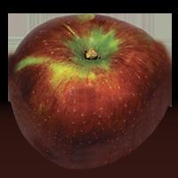 Howgate Wonder apple (Bar Lois Weeks photo)