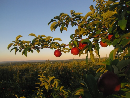 The view from Lyman Orchards, Middlefield, Connecticut (Russell Steven Powell photo)