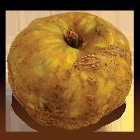 Knobbed Russet apple (Bar Lois Weeks photo)