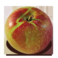 Marshall McIntosh apple (Bar Lois Weeks photo)
