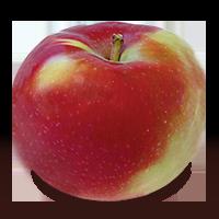 McIntosh apple (Bar Lois Weeks photo)