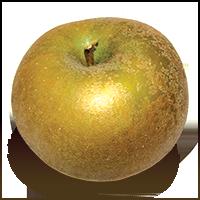 Pomme Grise apple (Bar Lois Weeks photo)