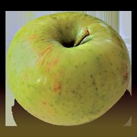 Porter apple (Bar Lois Weeks photo)
