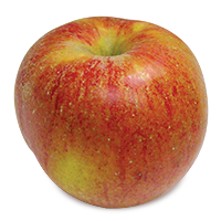 Ribston Pippin apple (Bar Lois Weeks photo)