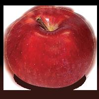 Spartan apple (Bar Lois Weeks photo)