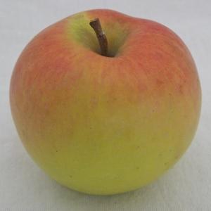 Suncrisp apple (Bar Lois Weeks photo)