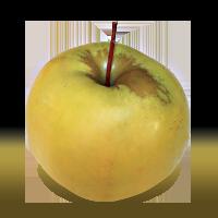 Tolman Sweet apple (Bar Lois Weeks photo)