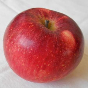Williams' Pride apple (Bar Lois Weeks photo)