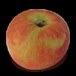 Zestar! apple (Bar Lois Weeks photo)