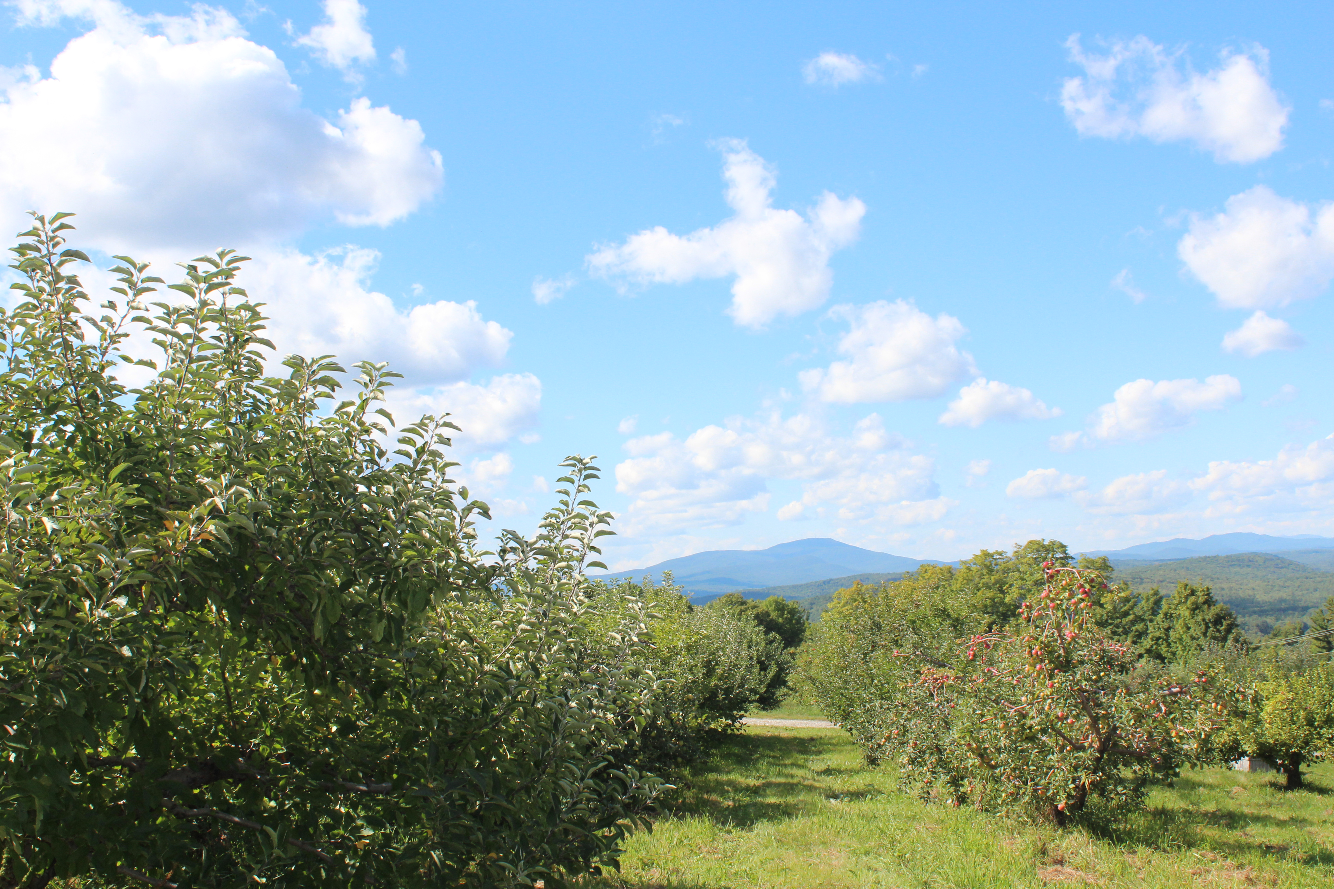 The western view toward Mount Kearsarge from Gould Hill Orchards, Contoocook, New Hampshire (Bar Lois Weeks photo)