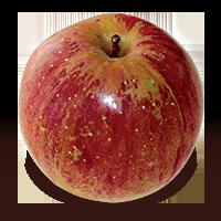 Granite Beauty apple (Bar Lois Weeks photo)