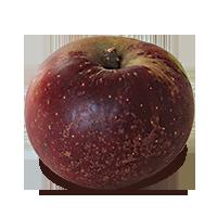 Arkansas Black apple (Bar Lois Weeks photo)